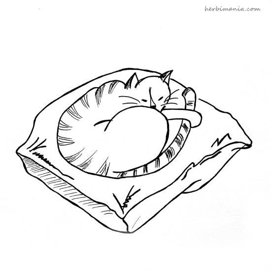 wyzwanie kaizen kot