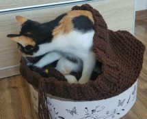 śpiworek dla kota